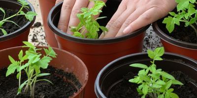 Сезонные работы в саду и огороде: третья неделя марта