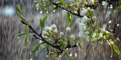 Листаем народный календарь: четвертая неделя апреля