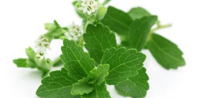 Когда и как правильно собирать лекарственные растения