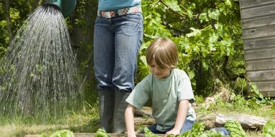 Сезонные работы в саду и огороде: вторая неделя июня