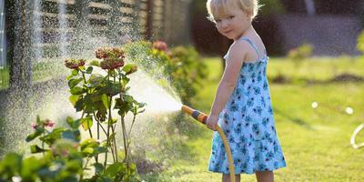 Сезонные работы в саду и огороде: четвертая неделя июня