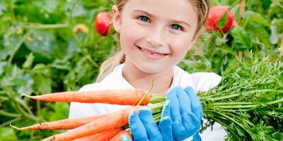 Сезонные работы в саду и огороде: конец июня - начало июля