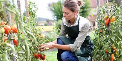 Сезонные работы в саду и огороде: вторая неделя июля