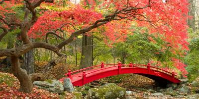 Идеи стильных садовых мостиков