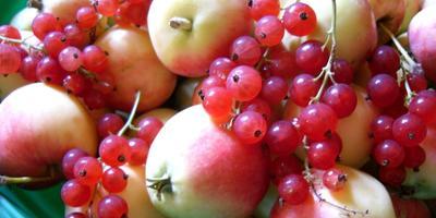 Варенье из яблок с красной смородиной