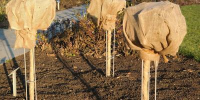 10 подручных материалов для зимнего укрытия растений