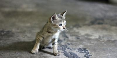 Как помочь бездомным кошкам