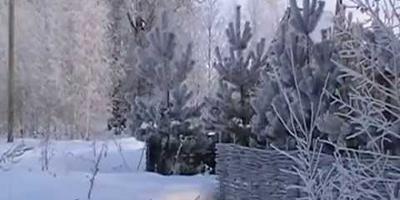 Морозный январский денек