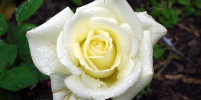 Магия цвета и цветов. Все краски сада для хорошего настроения и самочувствия