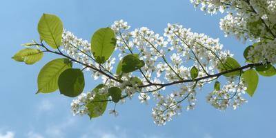 Листаем народный календарь: вторая неделя мая