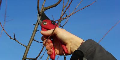 Сезонные работы в саду и огороде: четвертая неделя декабря
