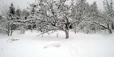 Зимнее, предновогоднее...