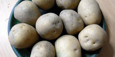 Пора готовить картофель к посадке