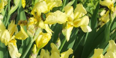Жуки поели цветы