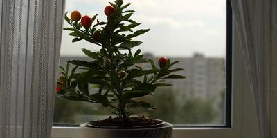 Как подобрать растения в детскую комнату