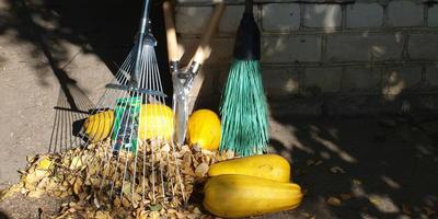 Мой новый любимый инструмент, или какие еще инструменты пригодятся дачнику осенью