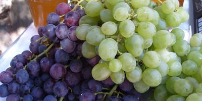 Виноград – одна из самых полезных ягод для человека