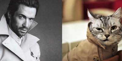 Ох уж эти котики... Ах уж эти кошки)))