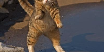 Улыбнемся мартовскому котику