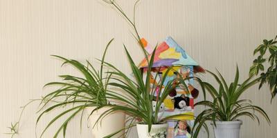 Наша небольшая домашняя оранжерея!