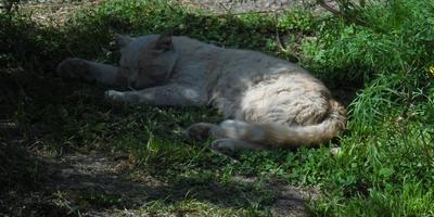 Что человеку в радость, то кошке - смерть
