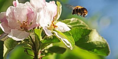 Пчел можно заменить песком