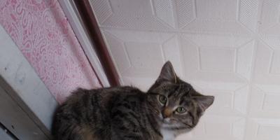 Айка - новая кошка в моем доме