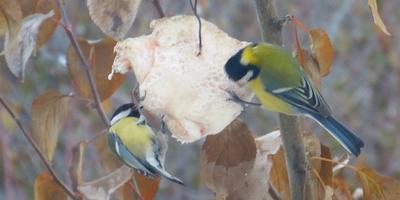 Конкуренция в птичьей столовой