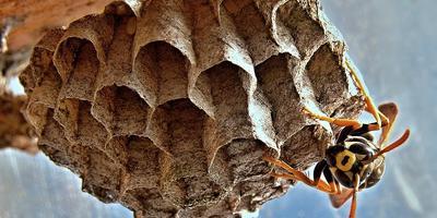 Испугаем насекомых-вредителей