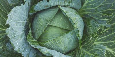 Старинные сорта овощей – свои и чужие