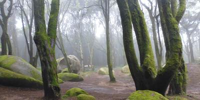 Вот такой сырой пейзаж... не деревья, а коллаж(((