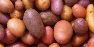 Как сохранить картофель в подвале и что бы он не испортился