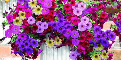 Ампельные растения в вашем саду