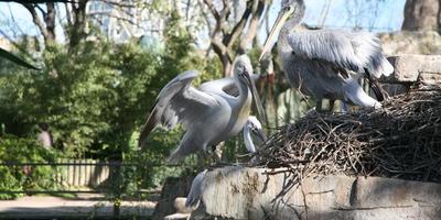 Путешествие в страну детства – зоопарк Барселоны