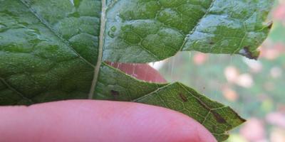 Фокус с листочком