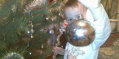 Применение новогодней елки после праздников