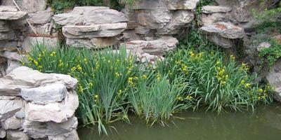 Шикарный пруд у соседей
