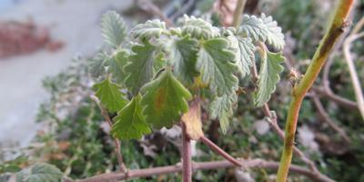 Растение из Крыма