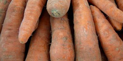 Как сохранить морковь зимой?