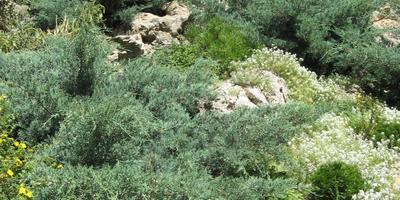 6 правил выбора растений для рокария