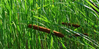 Как правильно подобрать растения для оформления водоема?