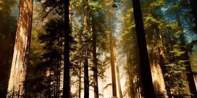 Завтра по всему миру празднуется день леса