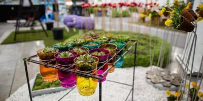 Выставка «Oslo Garden show» открывается 4 апреля в Норвегии