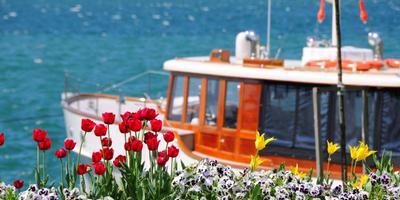 1 апреля пройдет «Фестиваль Тюльпанов» в Стамбуле