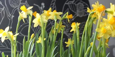 3 апреля откроется садоводческая выставка «OmaPiha» в Хельсинки