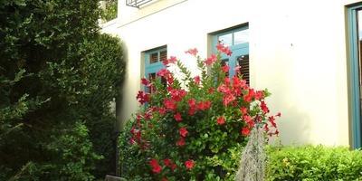 Как создать итальянский сад на маленьком пространстве