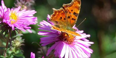 Осенние бабочки на моей даче