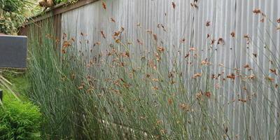 Как создать минималистичный и расслабляющий сад для всей семьи