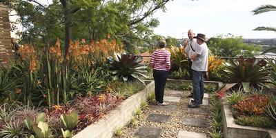 Ландшафтное урбанистическое искусство в Сиднее — сад на крыше