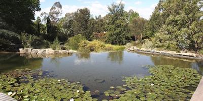 Австралийский сад в стиле натюрель на большом участке
